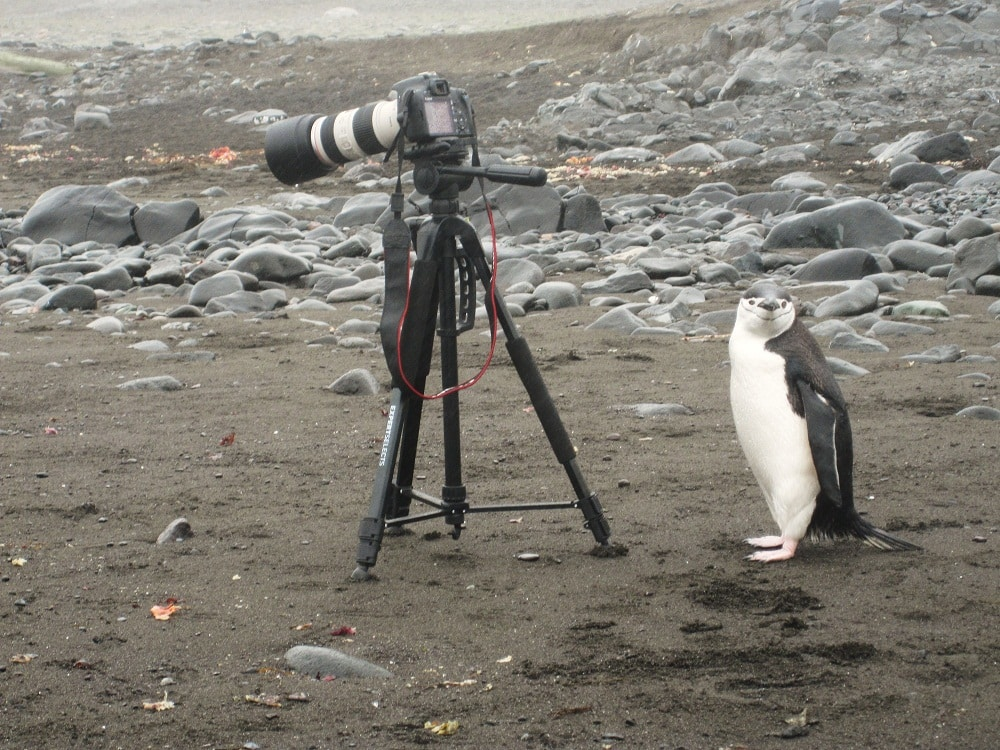 A penguin looking at my camera, what to pack for Antarctica, electronics, camera