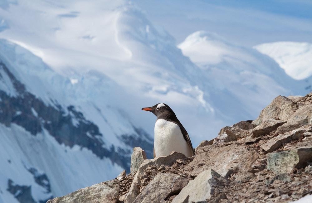A penguin on a mountain