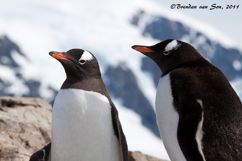 The great thing about photographing penguins is that they always seem to have great expressions on their face.  Often they look as if they're very wise.