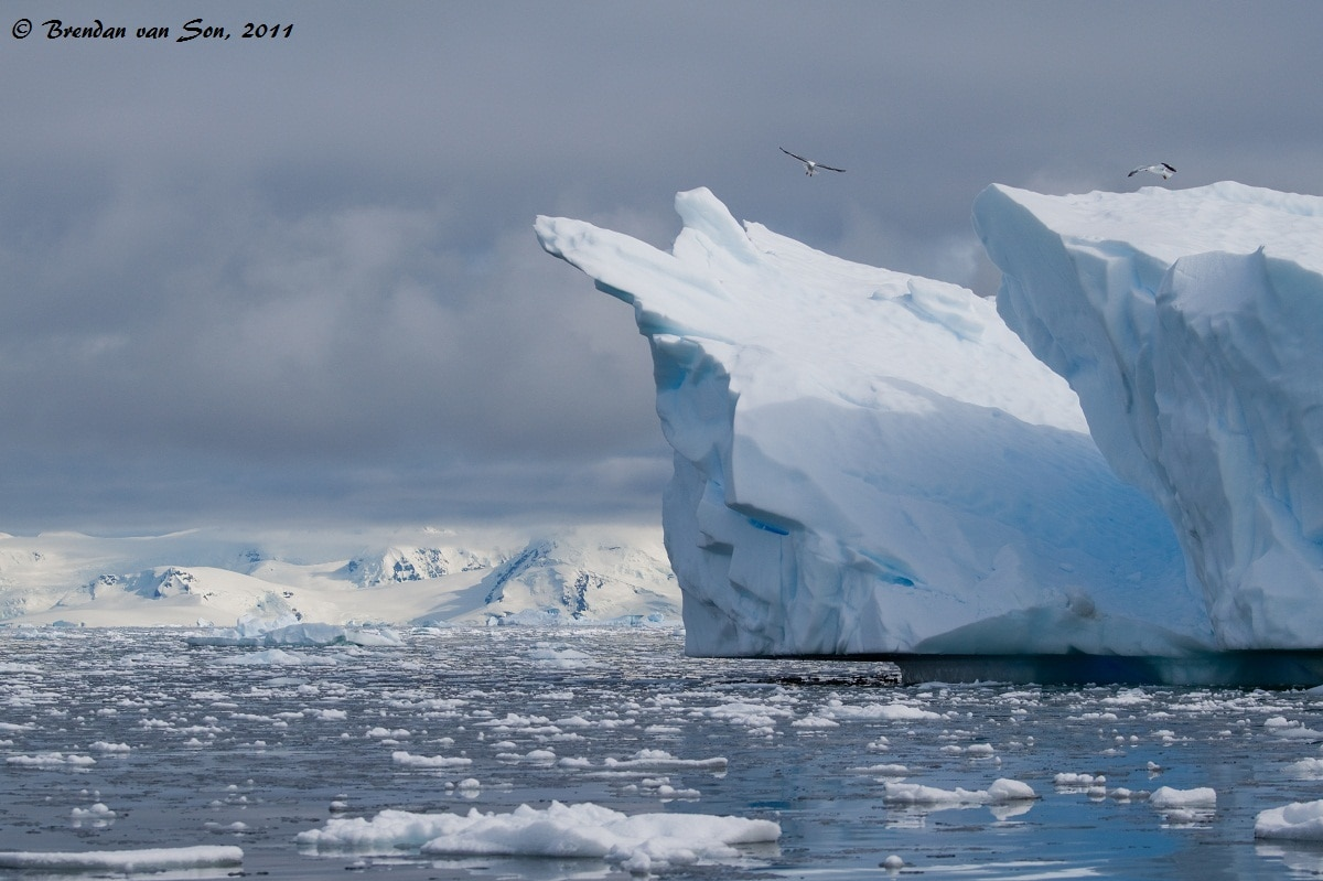 Birds find refuge from their flights and hunt from above as they perch themselves on giant chunks of ice.  Below you can see the gap below the ice caused by the change in tides.