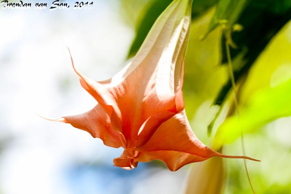 flowers, medellin, colombia