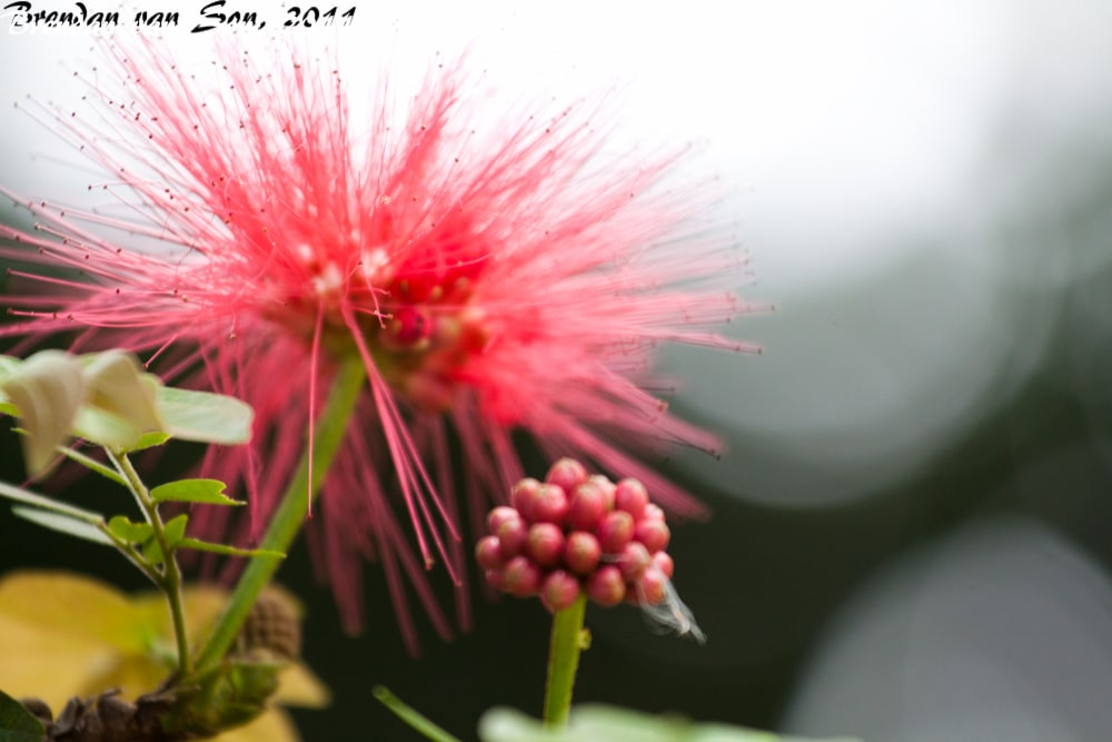 seeds, flowers, medellin, colombia