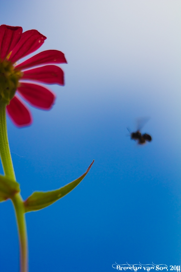 Bee Landing Area