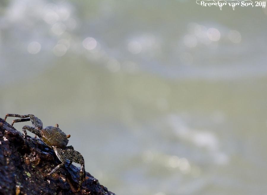 Crab View