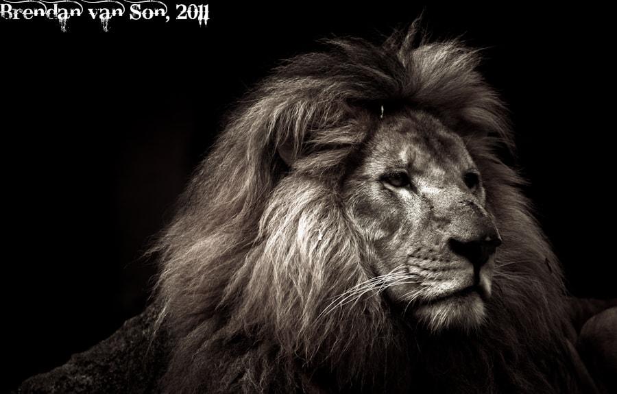 Lion Profile in Black and White