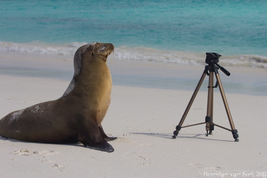 Tripod and sea lion
