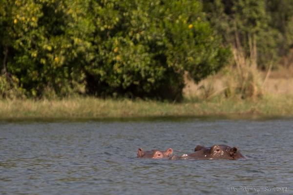 Burkina Faso, hippos