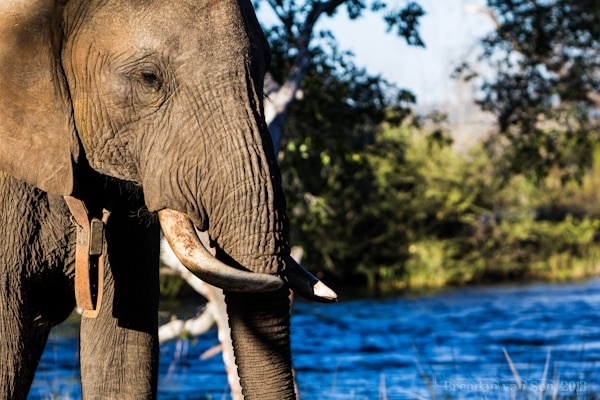 The Ethics of an Elephant-back Safari