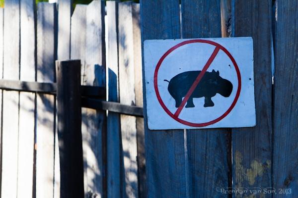 No Hippos