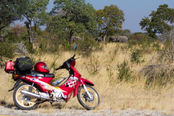 Elephants, Caprivi Strip