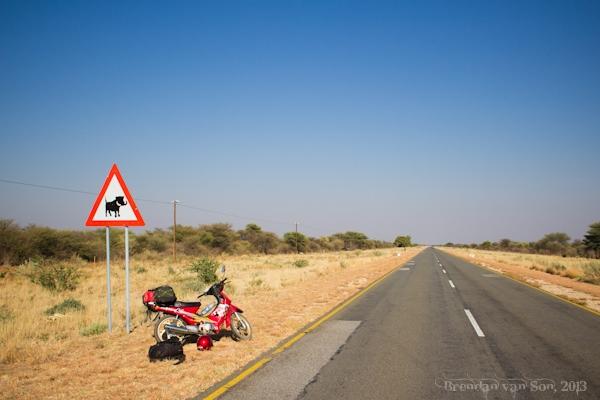 Warthog Crossing
