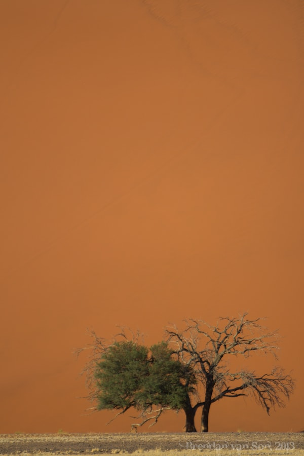 Tree Sossusvlei