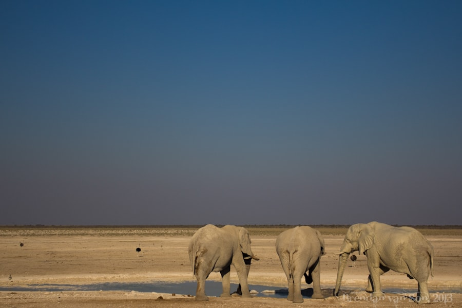 Etosha National Park, elephants