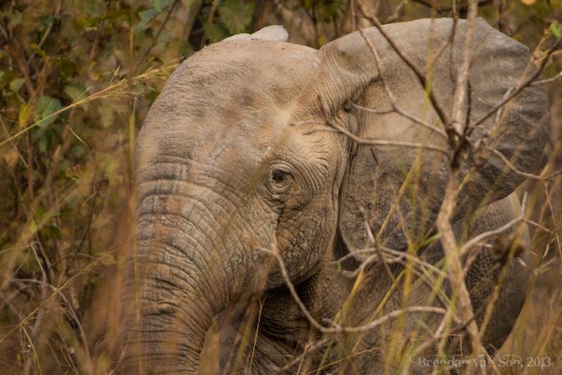 Ghana Pictures, Elephant Mole National Park