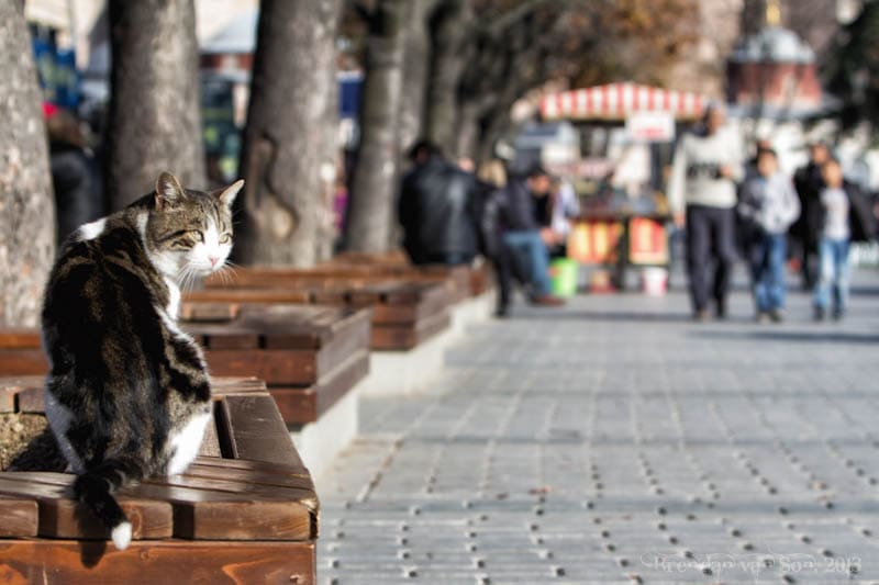 cats Istanbul