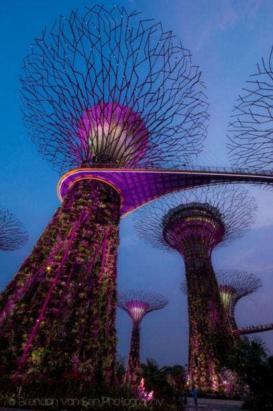 Singapore, unnatural trees