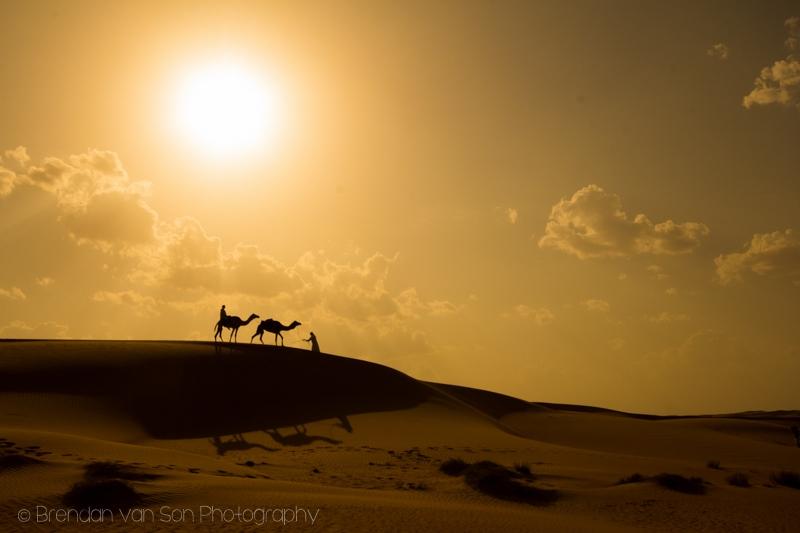 Camels Wahiba Sands Oman