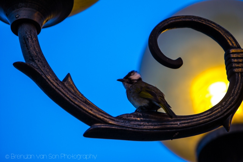Bird Changsha China