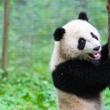 Because we can never have too many Panda Pictures
