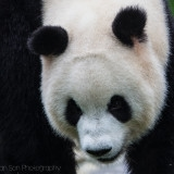The Chengdu Panda Center and How to Take Photos at a Zoo