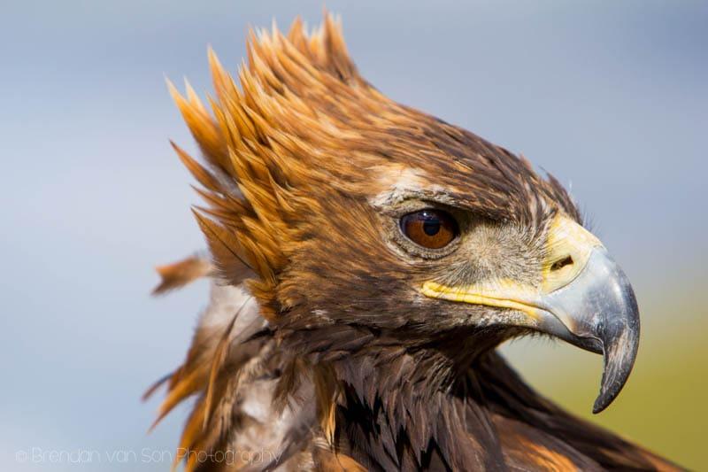Eagle looking all Vidal Sasson