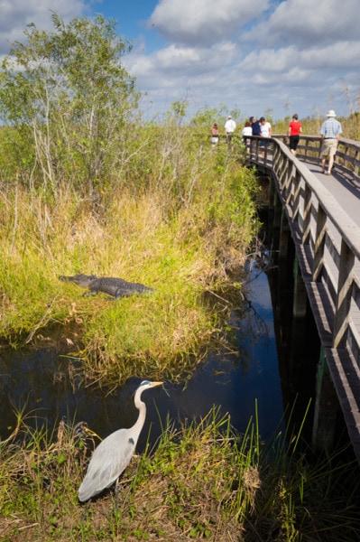 Boardwalk, Everglades National Park, Florida