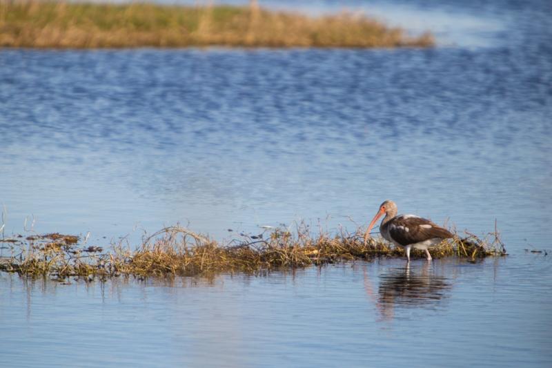 Merritt Island Wildlife Refuge-2