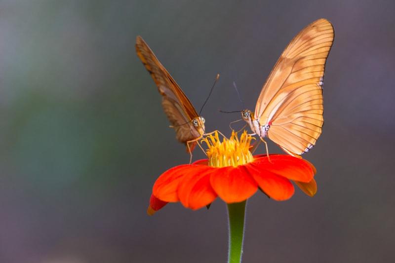 butterflies, Medellin, Colombia