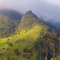 Is Salento, Colombia South America's Next Big Tourism Destination?
