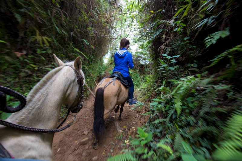 Horse riding, Salento, Colombia
