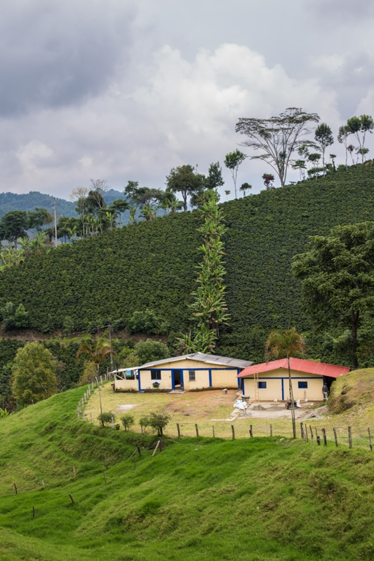 Plantation, Salento, Colombia