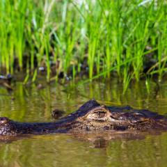 Visiting the Pantanal from Cuiaba, Brazil