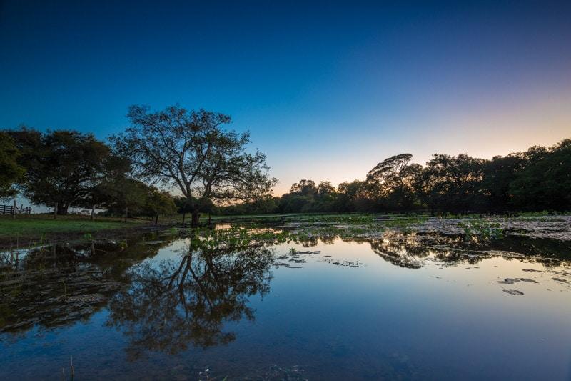 Pantanal, BrazilPantanal, Brazil