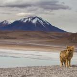 Photography on the Salar de Uyuni and Bolivian Altiplano