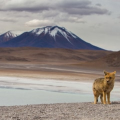 Photography on the Salar de Uyuni and Bolivian Altiplano