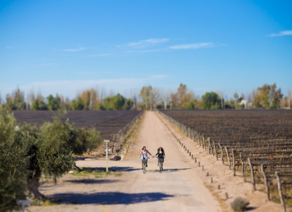 Wine and Bicycles in Mendoza, Argentina