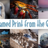 Win a Print from the Galapagos Islands!!!