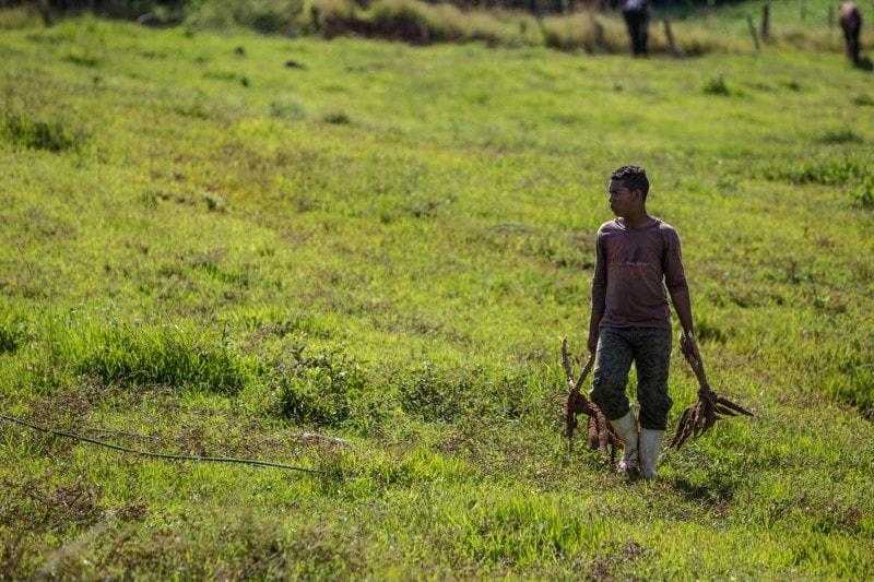 Farm, Vinales, Cuba