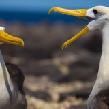 Photography Packing List for the Galapagos Islands