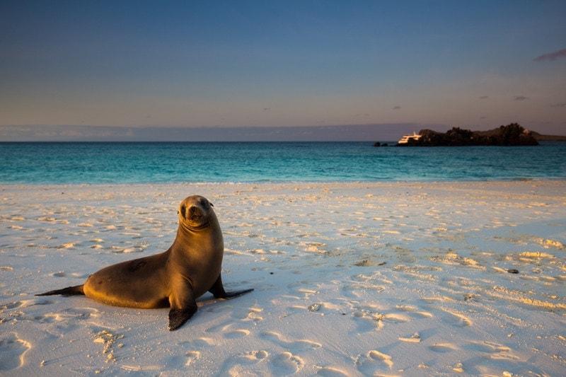 Gardner Bay, Galapagos Islands