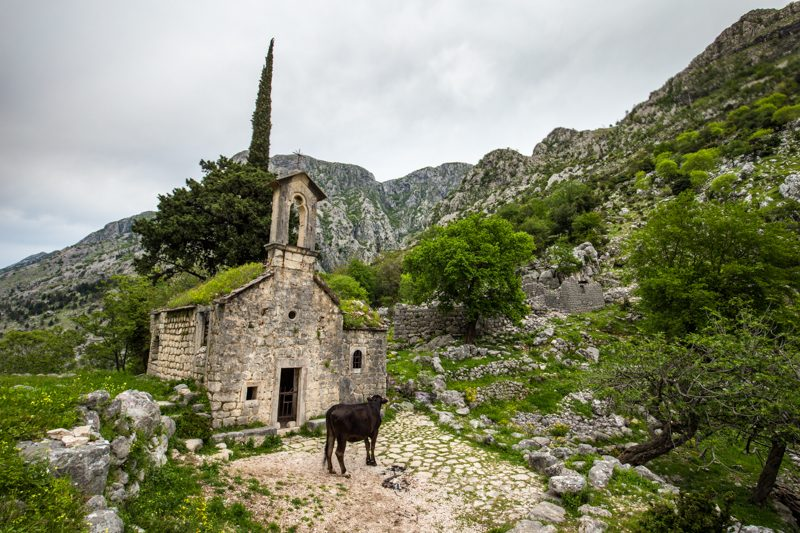 Grass Roofed Church Kotor
