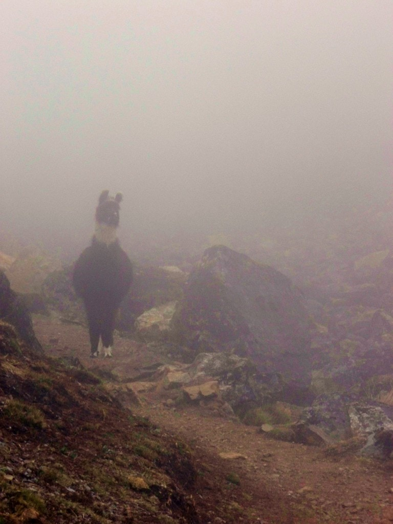As we took a break in the clouds, a llama came racing down through the fog towards us... Luckily I managed to get this shot, which I think it quite eerie.