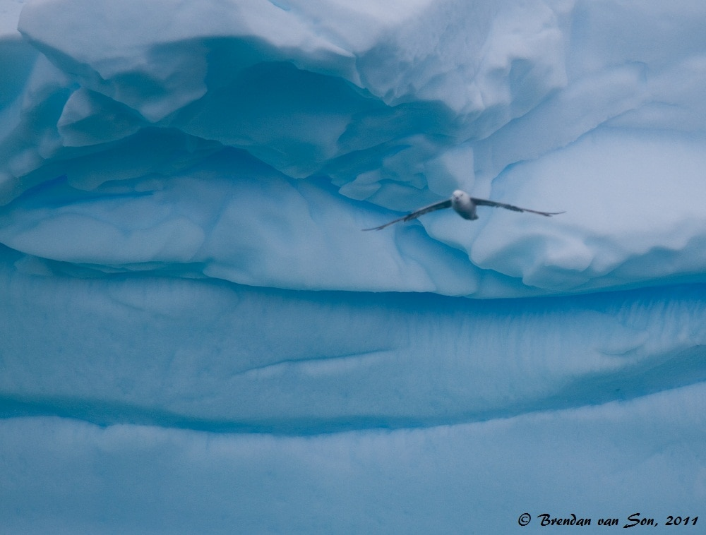 As I was photographing this iceberg a bird flew into my shot.  I would have loved to get him focused, but as it is I think it is really amazing how the bird blends with the ice.