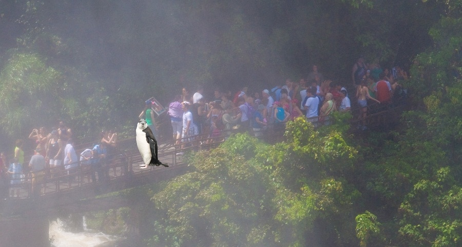 Penguin at Iguazu