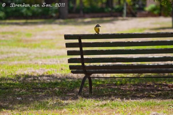 Asuncion, Paraguay, park, botanical gardens