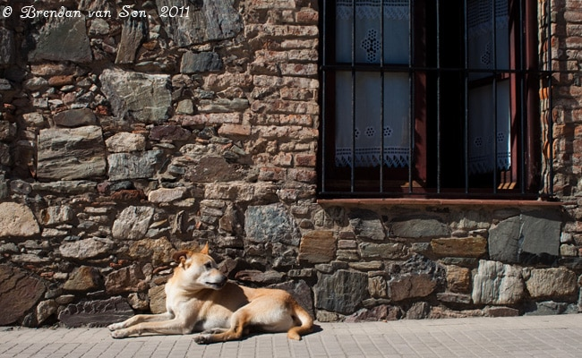 Colonia de Sacramento, Uruguay, window, house, dog