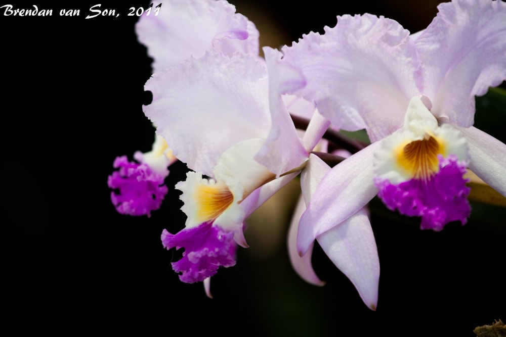 orchids, flowers, medellin, colombia