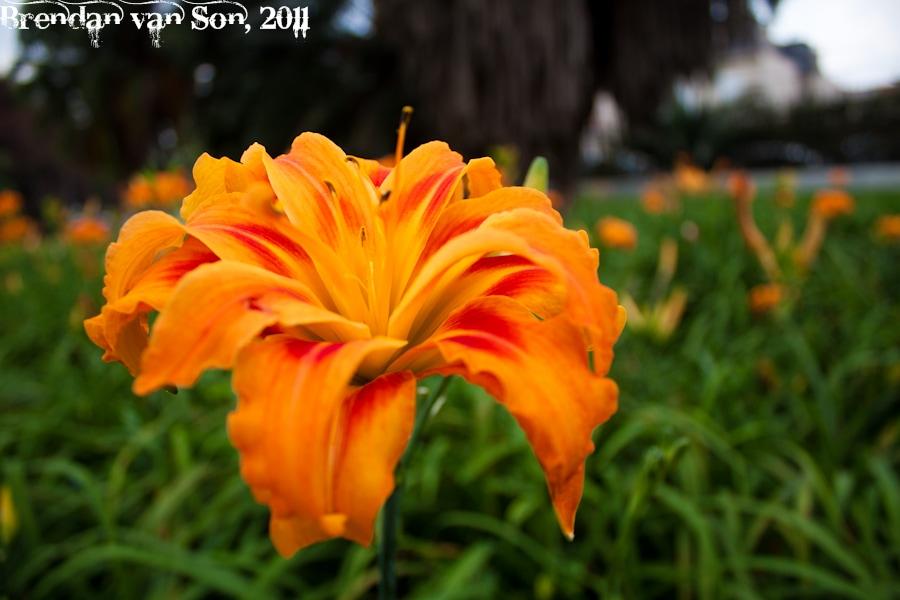 Flower in a park in Sao Paulo