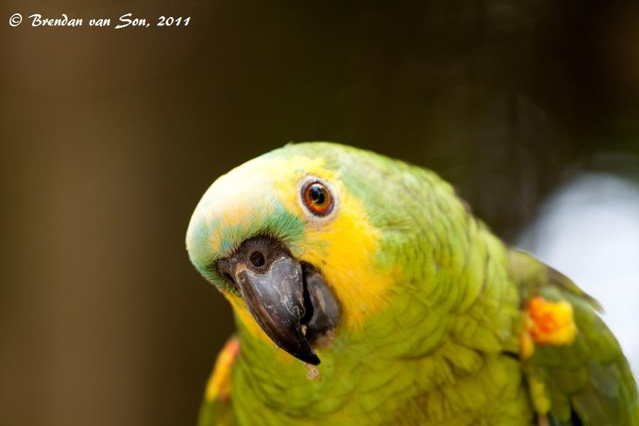 A Curious Parrot