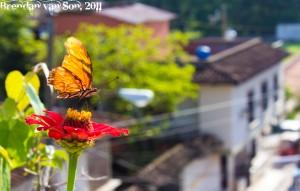 Butterfly in Copan